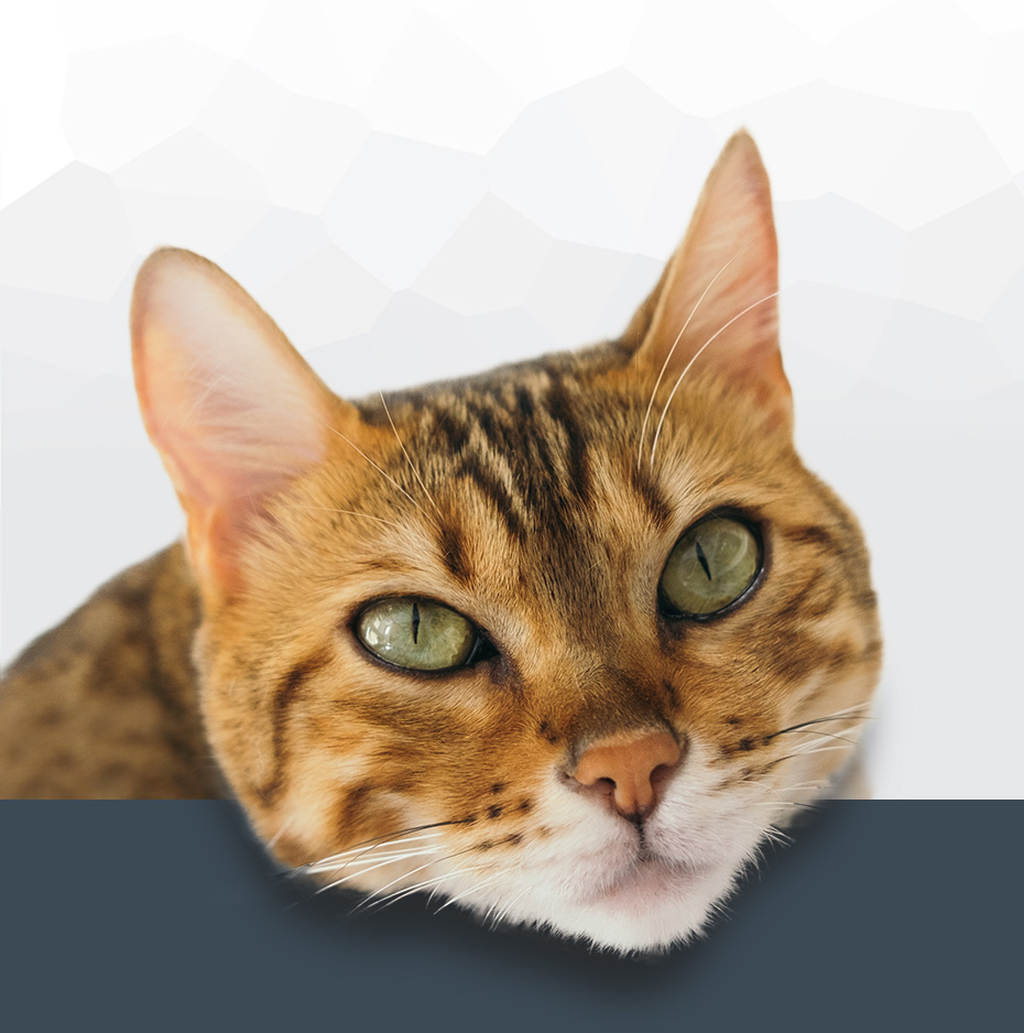 Timaru's Family Vet: Because We Care | Vet Care 6 Days a Week